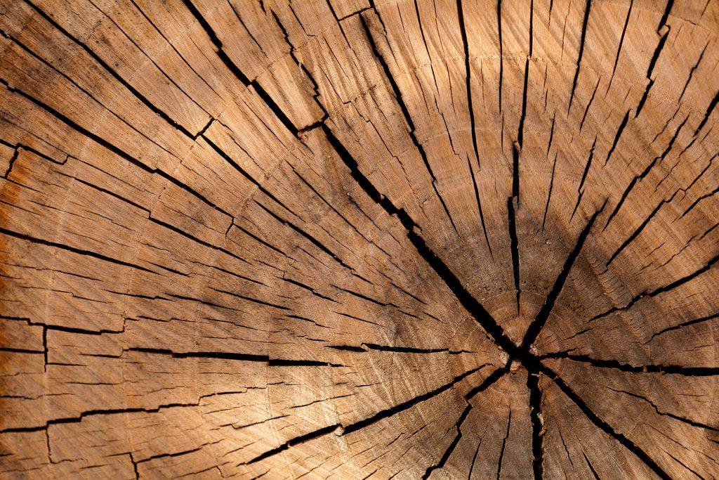Lublinianie z pasją: Drewniana sprawa – Wywiad z Woodboyem