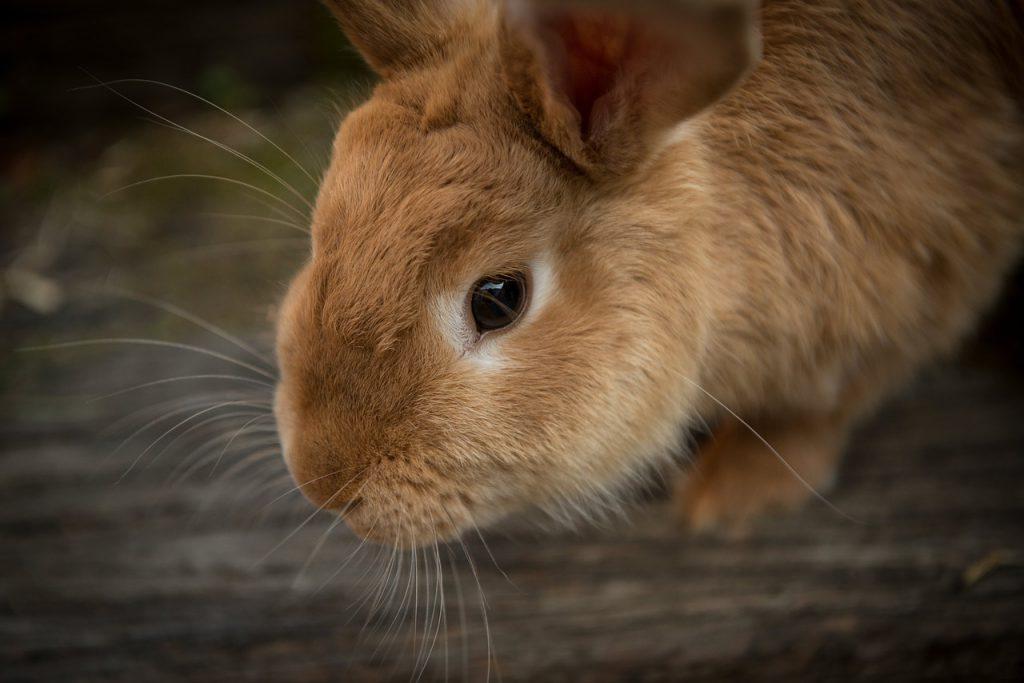 Uratuj chore i bezdomne króliki